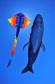Barn Door Kite by 61 Best Kite Dreams Images On Pinterest Kites Kite Flying And