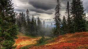1920x1080 fall wallpaper download wallpaper 1920x1080 autumn fog trees forest full hd