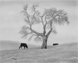 Oak Tree Drawing Landscape For Drawing Lone Oak Tree Oak Tree Landscape Drawings