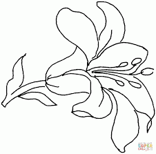 lily flowers 9 coloring page flowers free prints lilies
