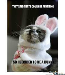 Silly Rabbit Meme - 48 very funny bunnies meme pictures of all the time