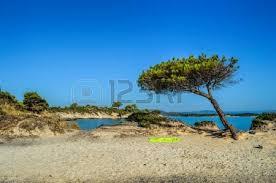 stones mediterranean pine tree and green