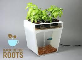 the best indoor plants indoor plant containers u2013 pathofexilecurrency us