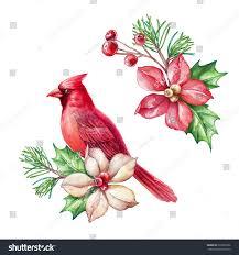 red bird poinsettia flower christmas holiday stock illustration