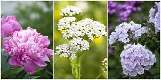 beautiful plants 20 best perennial flowers ideas for easy perennial flowering plants