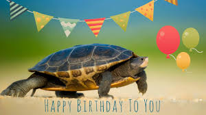 Ninja Turtle Meme - colors exquisite happy birthday ninja turtle meme with high