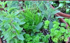 Herb Container Garden - container herb garden for beginners gardening flower and vegetables