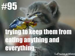 Cat Problems Meme - 29 best cat owner problems images on pinterest cats humor funny