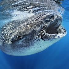 whale bioinformatics r u0026d