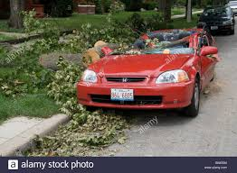 cube cars honda honda civic crushed by fallen tree after windstorm stock photo