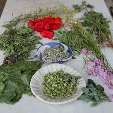 la cuisine des plantes sauvages animation plantes sauvages comestibles