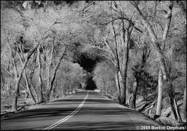 silver trees by burton diephuis black white magazine for