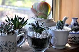 teapot terrarium succulent garden care indoor and tips house