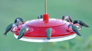 two best recipes for hummingbirds to attract them to our garden