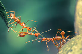 termite inspection report sample pest control bed bugs termites ants roaches sacramento roseville crazy ants