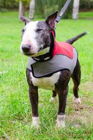 warm winter nylon bull terrier harness h14 1090 nylon winter