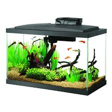 halloween fish tank background amazon com aqueon fish aquarium starter kit led 10 gallon pet