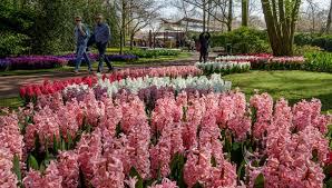 flower garden in amsterdam mother u0027s day in amsterdam i amsterdam blog
