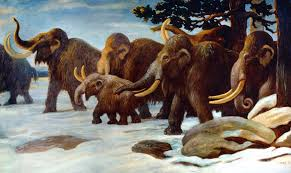 woolly mammoths survived 2000 bc