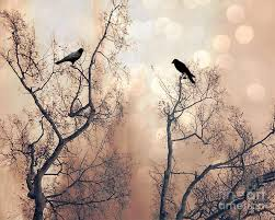 nature ravens trees surreal dreamy trees nature