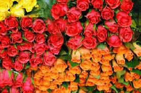 cheap bulk flowers wholesale roses flower shoppe buy roses in bulk cheap roses