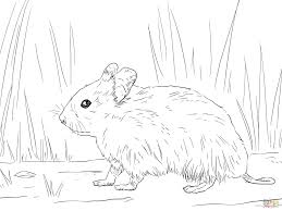 syrian hamster coloring page free printable coloring pages