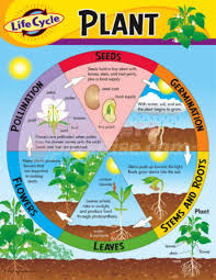 Life Of A Flower - plants life cycle line do discover stories through timelines