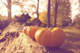 fall pumpkin wallpaper pumpkin with lights wallpaper