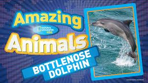 secret language of dolphins