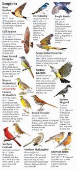 Kansas Birds images Birds of kansas quick reference publishing jpg