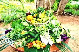 small urban vegetable garden backyard how to design a ideas nuevas