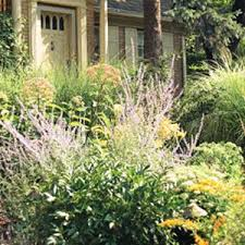 115 best grasses edging border plants walkways images on