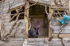rabbit treehouse turns yard in in rabbit garden