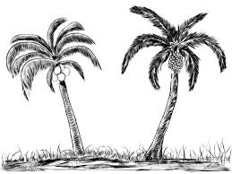 palm tree drawing free download clip art free clip art on