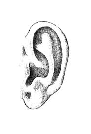 Ears Coloring Pages Many Interesting Cliparts Ear Coloring Page