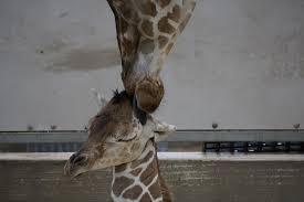 fort wayne children u0027s zoo zoo news