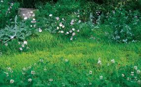 low maintenance alternatives to lawns fine gardening