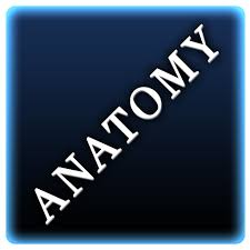 Anatomy And Physiology Dictionary Free Download Amazon Com Human Anatomy U0026 Physiology Terminology Multiple
