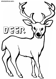 deer coloring pages coloring pages download print