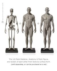 Human Anatomy Reference 96 Best Pure Ecorche And Anatomy Images On Pinterest Anatomy