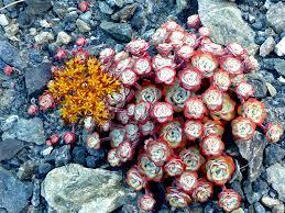 port orange florist sedum with orange flower floras lake state park and blacklock