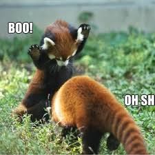 Red Panda Meme - red panda s are scary by cuteasfuck meme center