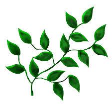 feuille de cuisine agréable cuisine verte et marron 6 image feuille branche