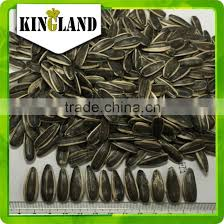export black sunflower seeds for oil and edible human consumption