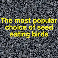 pennington select black oil sunflower seed wild bird seed and feed