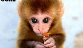 Baby Monkey Meme - funny baby monkey memes daily funny memes
