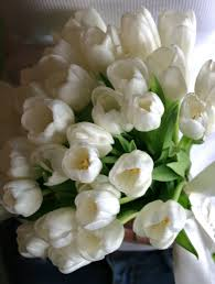 wedding flowers tulips wedding bouquet simple wedding bouquet white tulip bouquet