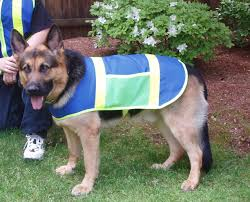 reflective hunting dog safety vest price includes free shipping