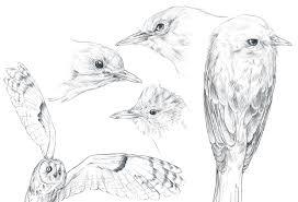 brook rice bird sketches