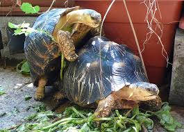 Tortoise Bedding Rabbit Pellets Tortoise Forum